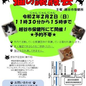 先出し♪2月の譲渡会! 2/2(日)猫の譲渡会@越谷市保健所、2/1(土)犬里親会@浅草エリール