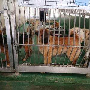 3/30 茨城センターへ 犬2頭の引取り ~これからの不安もある
