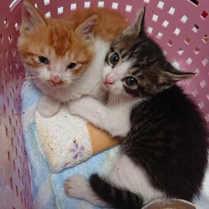 続きの2頭と、新たな2頭 ~子猫と乳飲み子猫