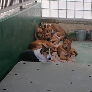 10/27 茨城センターへ ~犬2頭+子猫3頭の引取り