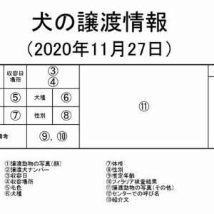 茨城センター 犬の譲渡情報(2020年11月) ※2020/11/27更新