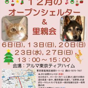 12/27日(日)ティアハイムオープンシェルター里親会♪