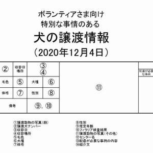 茨城センター 訳アリ・犬の譲渡情報(2020年12月) ※2020/12/4更新