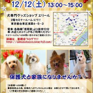 12/12(土)犬里親会@浅草エリール会場 13時~15時です♪ ~ダックスMIX♂ゲンキ参加~