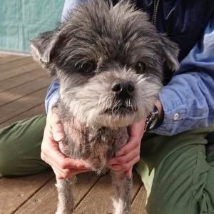 12/16 柏市愛護センターから犬2頭の引取り ~医療ケアが必要な2頭です