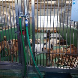 12/17 茨城センターから犬2頭の引取り ~収容犬が減りません・・