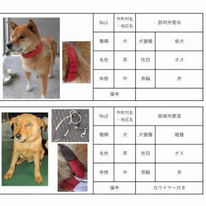 茨城センター 犬猫収容情報  12/1~12/18まで