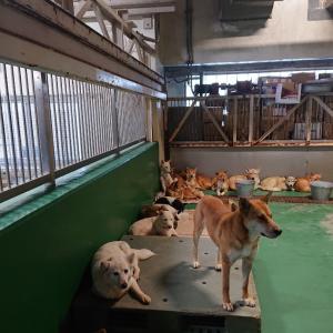 12/28 今年最後の茨城センター 収容犬140頭の中で・・