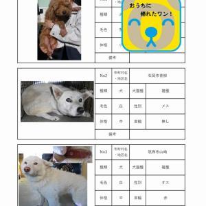 茨城センター 犬猫収容情報  12/21~12/28まで