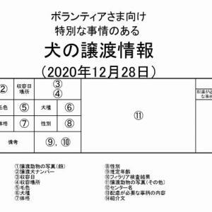 茨城センター 訳アリ・犬の譲渡情報(2021年1月) ※2020/12/28更新