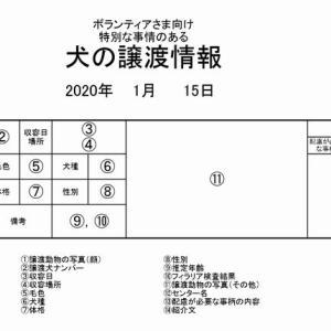 茨城センター 訳アリ・犬の譲渡情報(2021年1月) ※2021/1/15更新