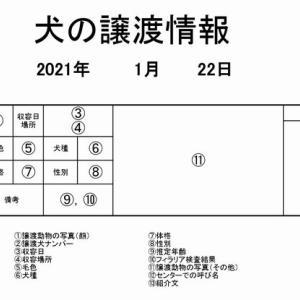 茨城センター 犬の譲渡情報(2021年1月) ※2021/1/22更新
