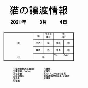 1頭でも助けてください ~茨城センター 猫の譲渡情報(2021年3月) ※2021/3/4更新