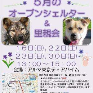 5月のティアハイムオープンシェルター里親会♪ &5/16(日)参加一覧
