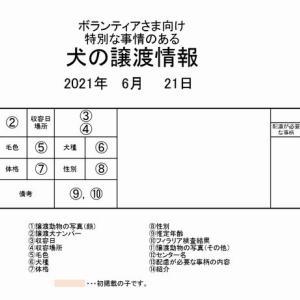 茨城センター 訳アリ・犬の譲渡情報(2021年6月) ※2021/6/21更新