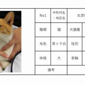 茨城センター 犬猫収容情報  9/1~9/15まで