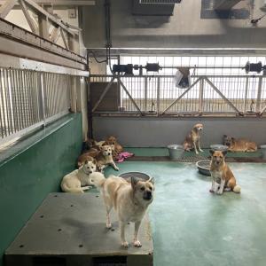 9/24 茨城センターへ その1 ~犬1頭+子猫1頭+搬送子猫9頭の引取り