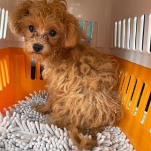 ゴミ置き場に捨てられていた犬 ~ボロボロの段ボールに詰められていた