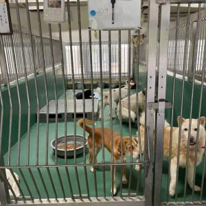 10/12 茨城センターへ ~子犬1頭+子猫8頭の引取り
