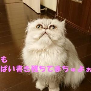 トラちゃん家族との再会と逆走台風12号