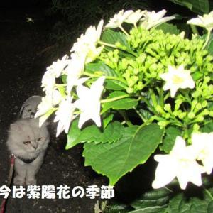 にゃん達の恋愛事情・・・かなっ(;^_^A