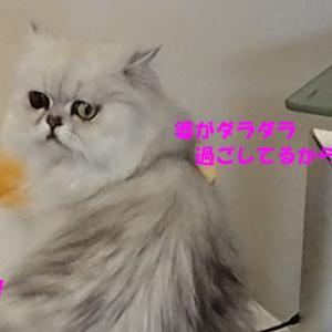 柚、萌とのお別れと先月(7月)の出来事諸々