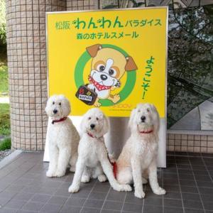 ルキヤと小春+珠里の夏休み 2020 ~松阪わんパラ宿泊編~