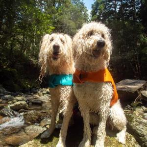 ルキヤと小春の夏休み 2020 ~トヨタの森で川遊び ふたたび~