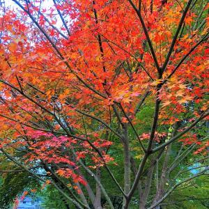 紅葉の色付きが始まる