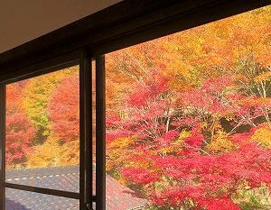 我が家、紅葉で真っ赤に。ベーコン巻きロールキャベツ