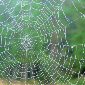 目に蜘蛛の巣が?「飛蚊症」だって。