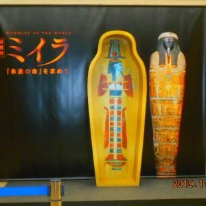 「『特別展 ミイラ ~「永遠の命」を求めて』国立科学博物館」S6523