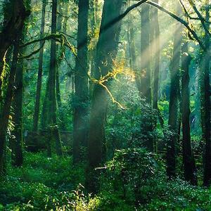 秘密の森を歩く。/夜の闇があなたを見守ることができるように。夜の闇はいつもそこにいて、いつも見守っている。