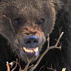 ユーカラの樹/千年紀動物園の大規模改修工事が始まったカムイ・ホプニレの夜。ポンヤウンペに導かれた異世界からの使者であるヒグマのウルスブリュヌは巨体をゆすりながら現れた。