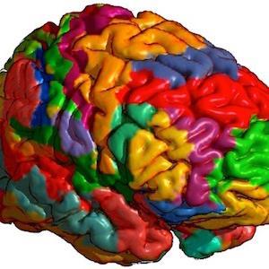 世界の捕食者として。/ブロードマンの脳地図に基づいて、パペッツの回路とヤコブレフの回路を参考に大脳辺縁系(扁桃体並びに海馬体)と大脳新皮質のパフォーマンスを上げるために。