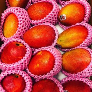 台湾からのマンゴーに感謝
