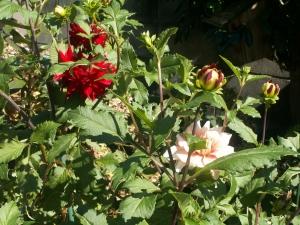 赤い花、白い花