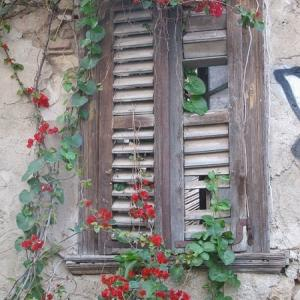 冬のアテネにブーゲンビリア