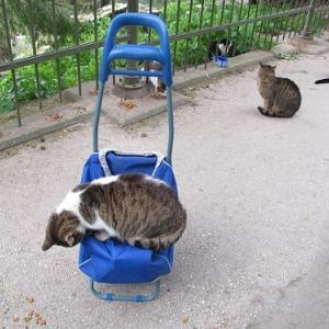 アテネ市から動物保護のための外出許可書をもらう。
