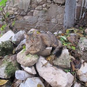 ギリシャの猫のシェアハウス