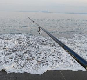 サーフヒラメ接岸調査