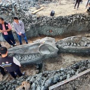 タイ中部でクジラの骨格出土