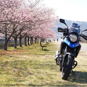 2021桜ツーリング