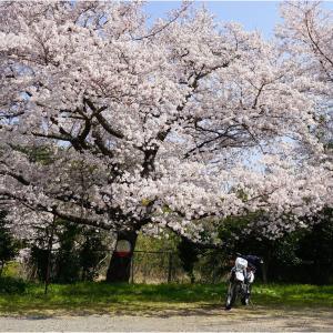 山梨桜ツー2019
