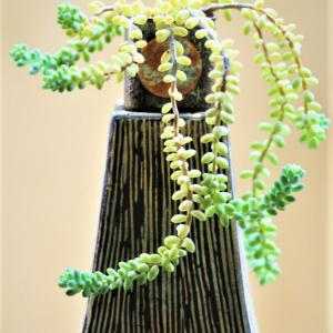 Succulents。