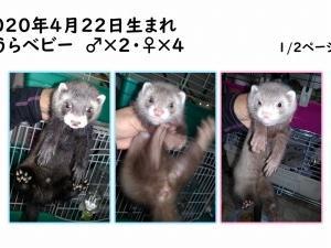 お目目ぱっちりシリーズ☆