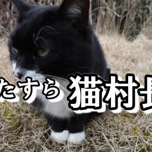 ひたすら猫村長