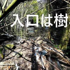 入口は樹林