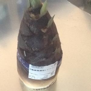 旬な筍料理を作る