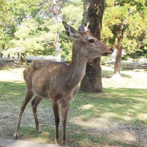 お友達と奈良へ① 二月堂とコスモスいっぱいの般若寺